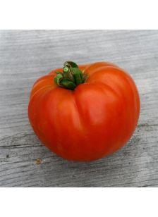Tomate reine de Ste Marthe AB