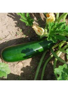 Courgette AB